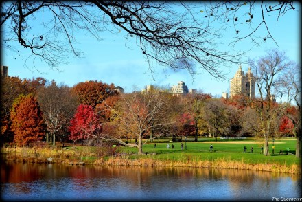 Central-park-foliage-newyork-travel-blogger