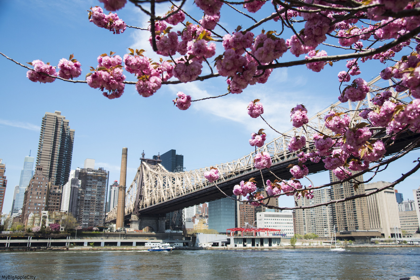 http://mybigapplecity.com/wp-content/uploads/2015/05/Spring-Cherry-blossom-tree-pink-New-York-Travel.jpg