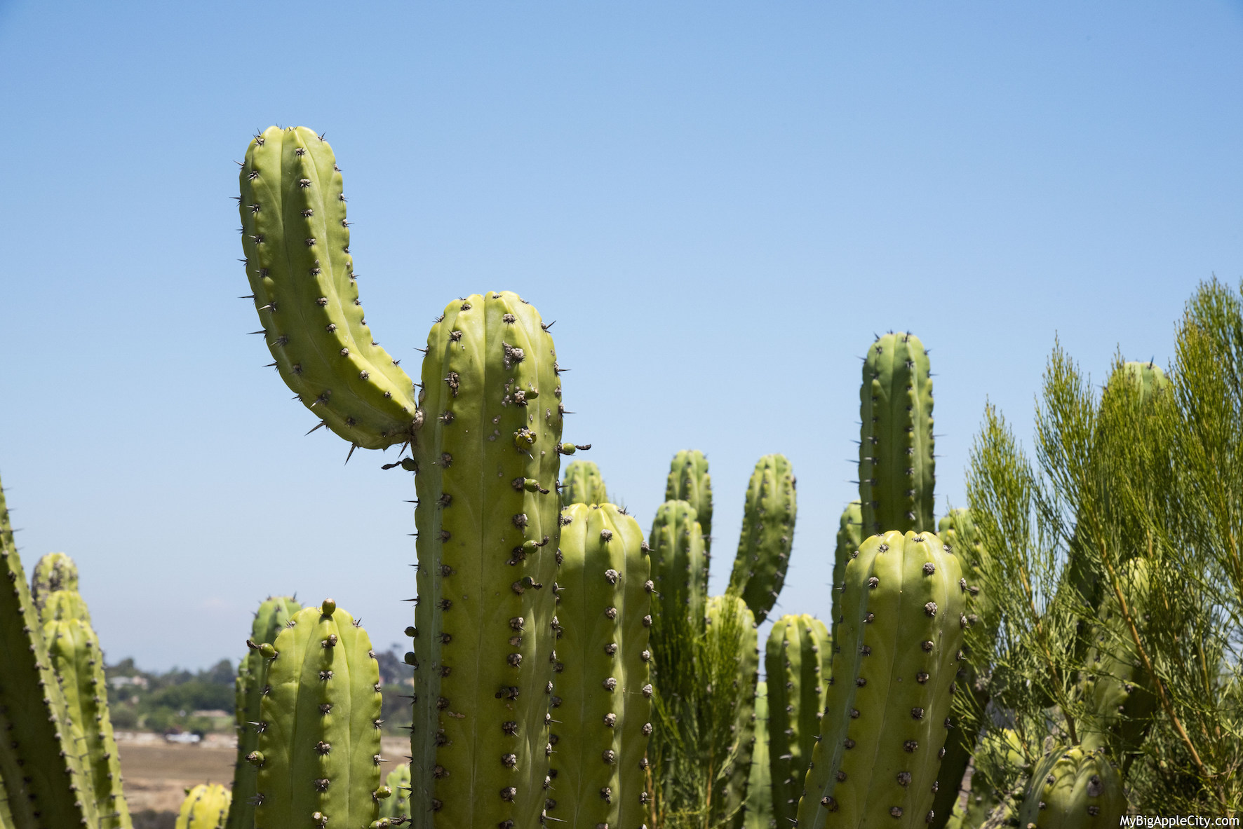 Cactus-travel-San-Diego-Lifestyle-Blogger-USA-MyBigAppleCity