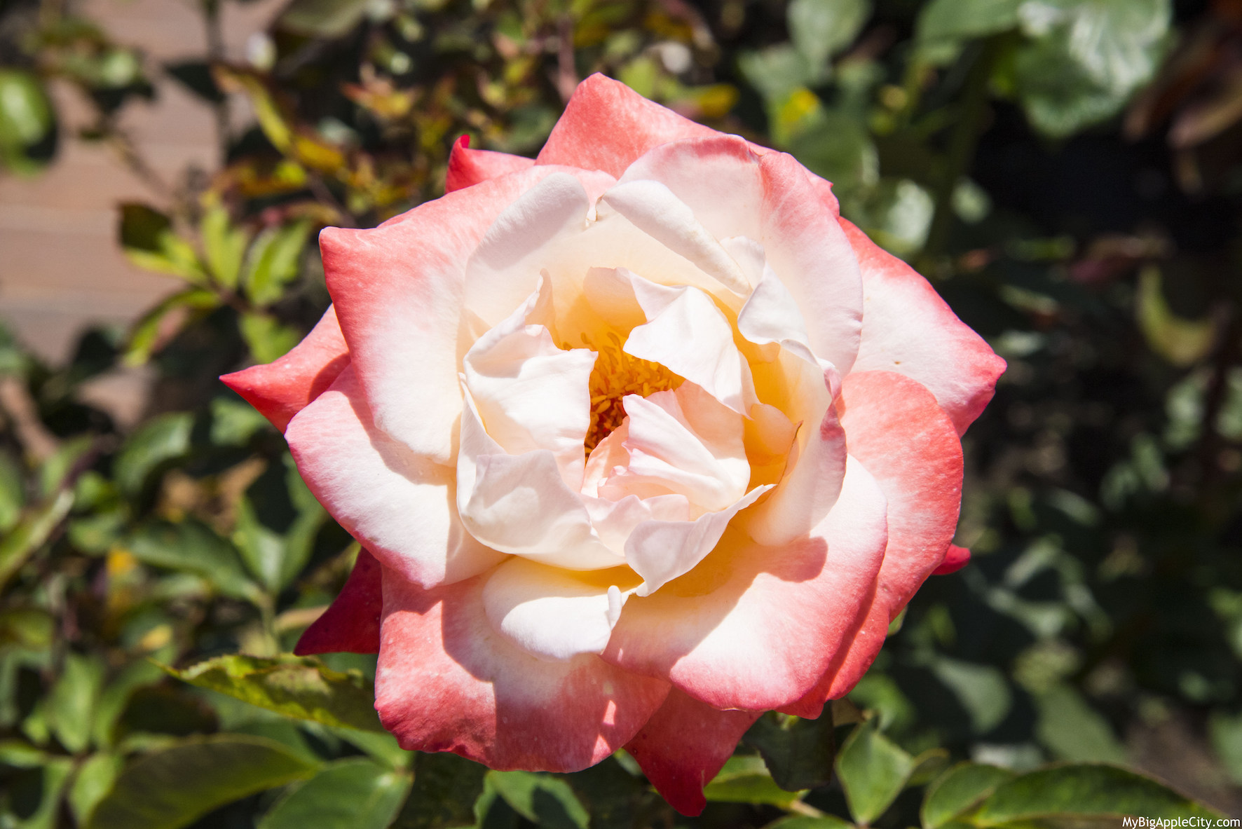 Rose-garden-San-Diego-Travel-Blogger-USA-MyBigAppleCity