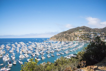 Visit-Catalina-Island-Day-trip-travelblog-summer-MyBigapplecity