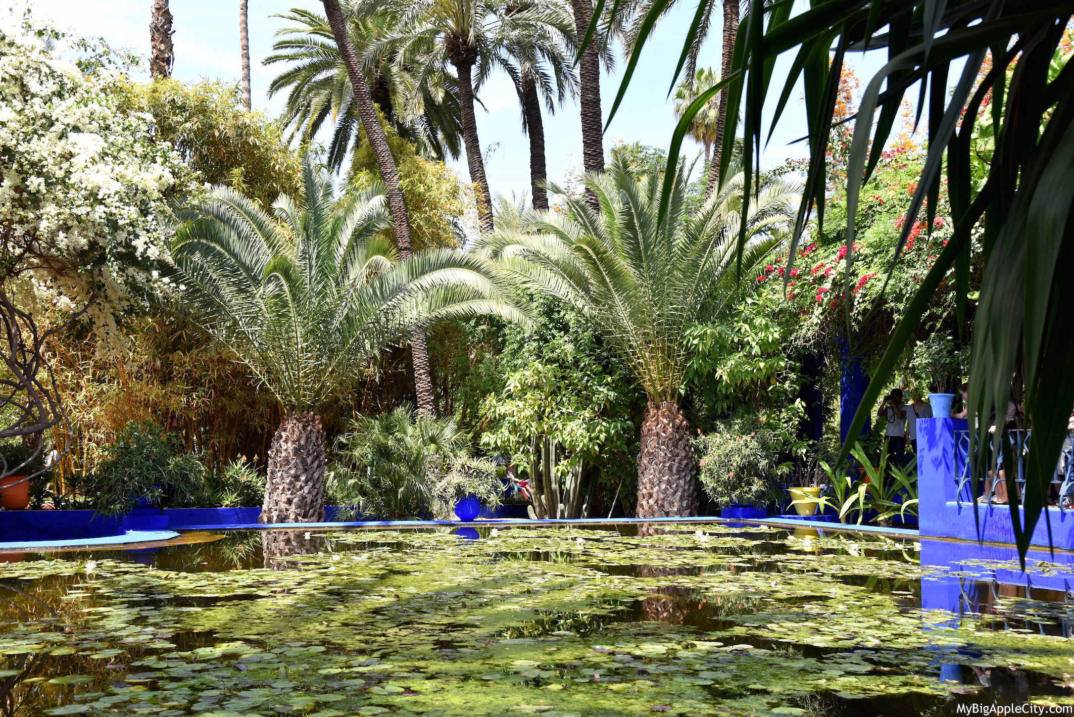 Majorelle-Garden-Marrakech-Travel-Blogger-2016-MyBigAppleCity