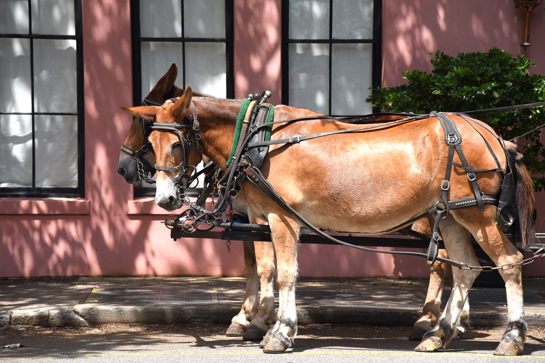 Horse carriage tour in Charleston, South Carolina