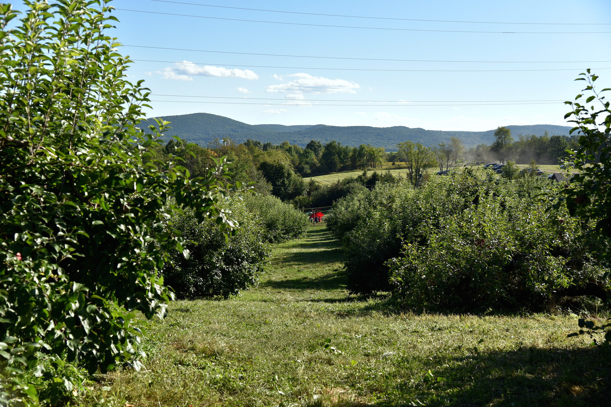 Best place for apple picking in New York 2016