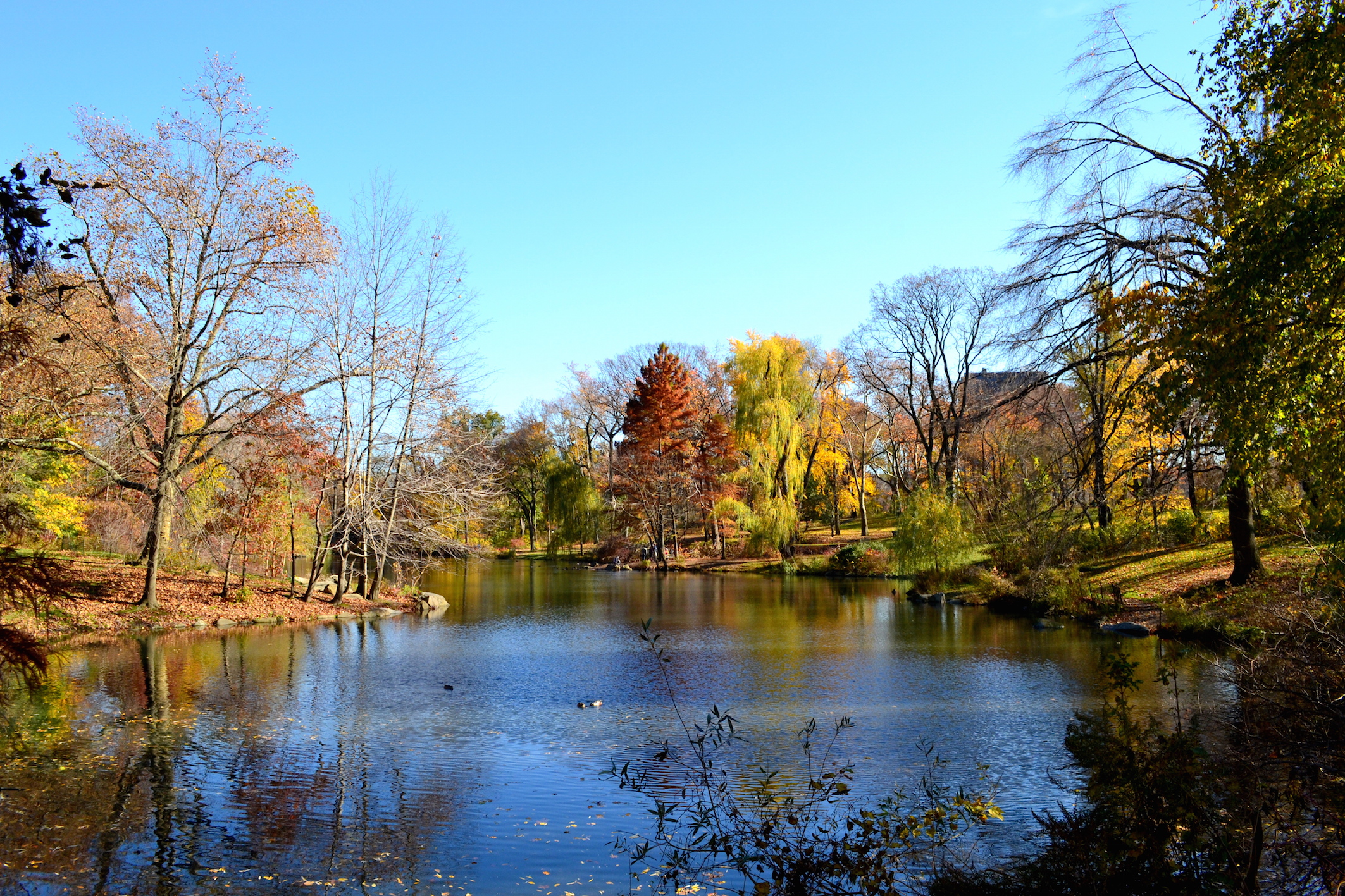 NYC travel blog Central Park Fall 2016