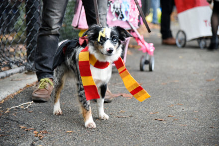 Harry Potter Costume for dog Halloween