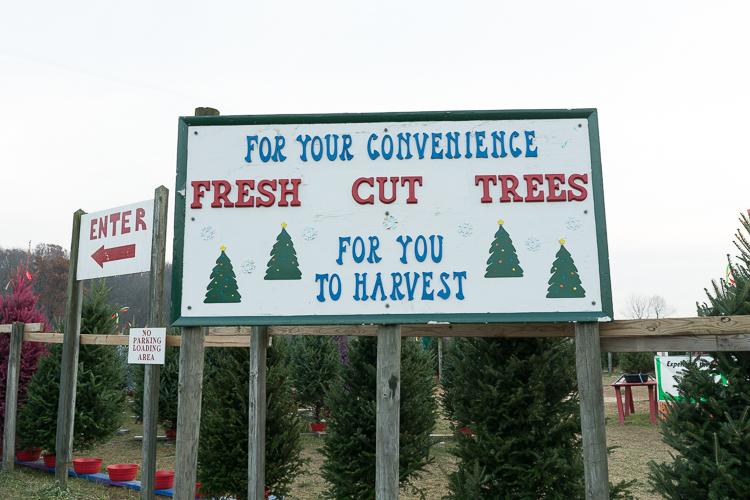 Cut your own tree Wyckoff tree farm NJ