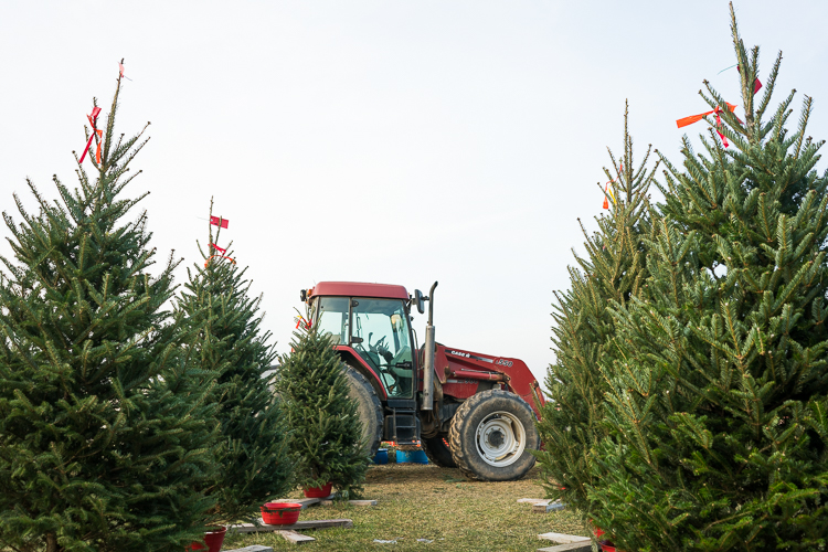 Christmas tree farm NJ NYC Travel blog