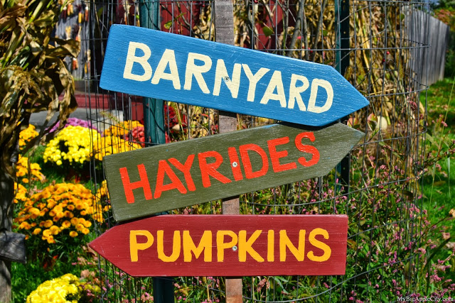 pumpkin-picking-nyc-mybigapplecity-sign